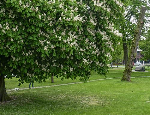 Een oerwoud in de stad – groenbeleid voor gemeenten